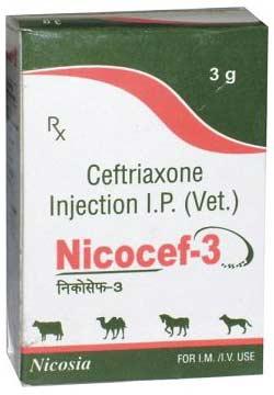 Nicocef Injection