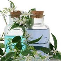Ajwain Seed Oil
