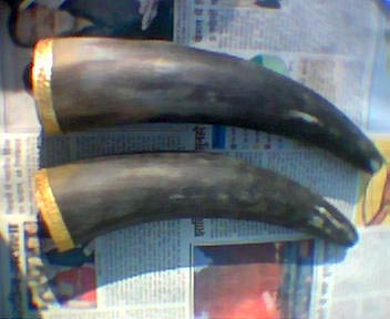 Horn and Bone Drinking Horn 04