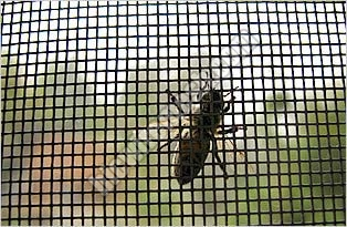 Mosquito Proof Screen 01