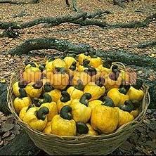Brazil Raw Cashew Nuts