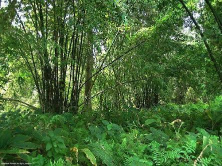 Forestry Plants