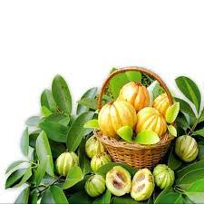 Garcinia cambogia cvs brand review