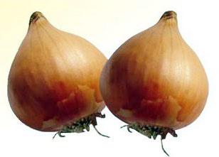 Mayur Lasgaon Onion Seeds