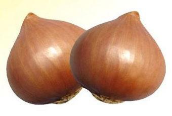 Mayur Light Red Onion Seeds