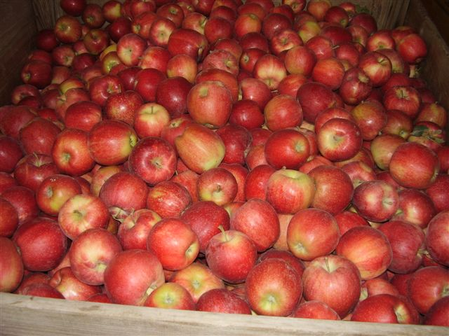 Fresh Apricots,Fresh Oranges,Fresh Apples Exporter,Fresh