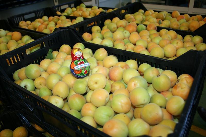 Fresh Apricots 01