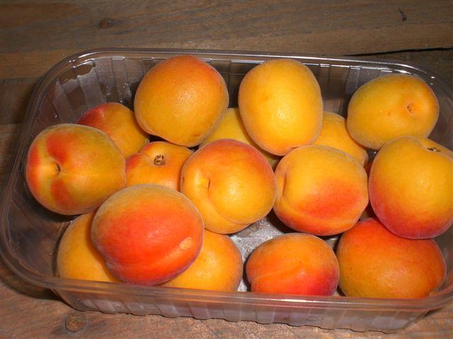 Fresh Apricots 02