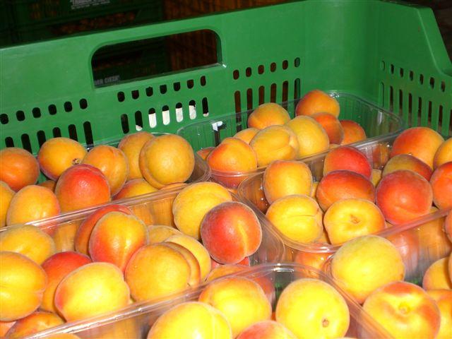 Fresh Apricots 05