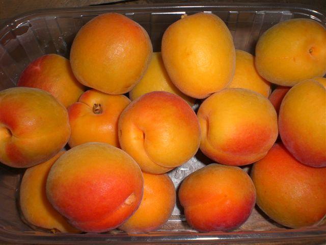 Fresh Apricots 06