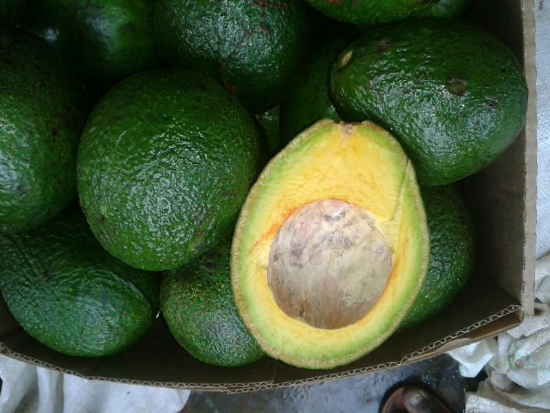 Fresh Avocado 01
