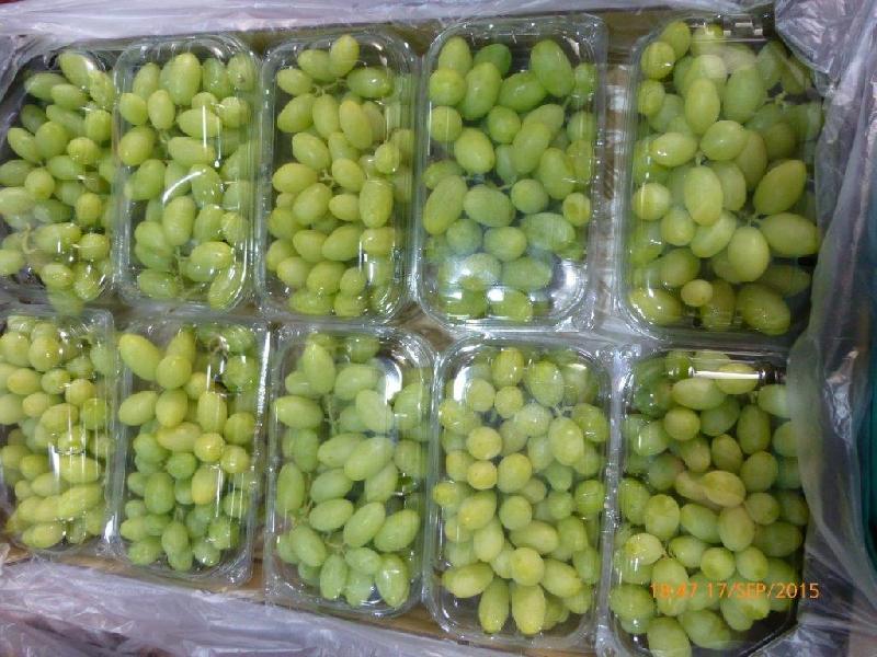 Fresh Grapes 07