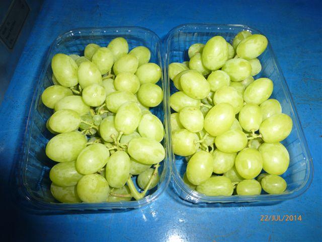 Fresh Grapes 10