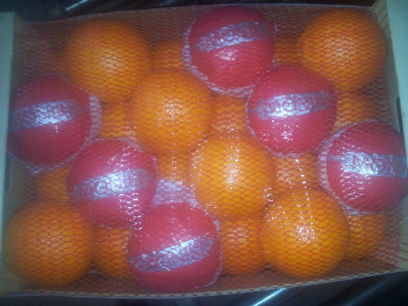 Fresh Oranges 04