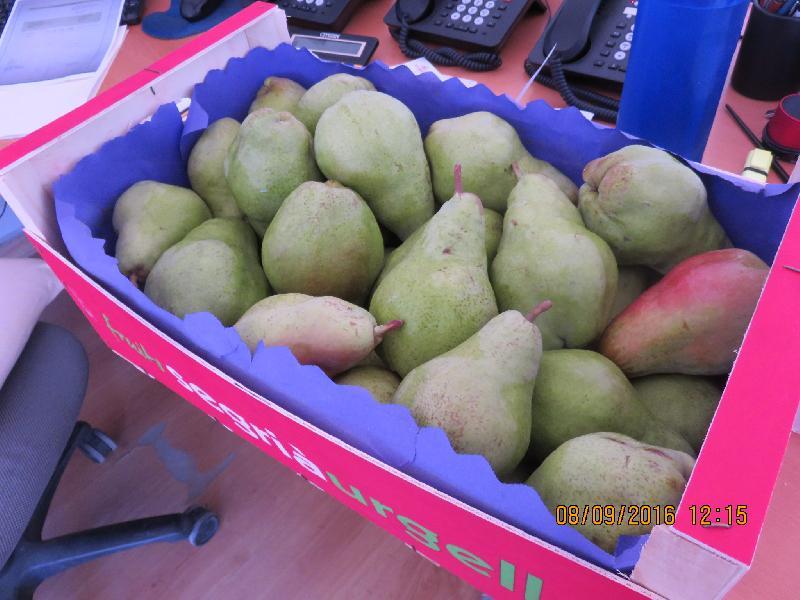Fresh Pears 03