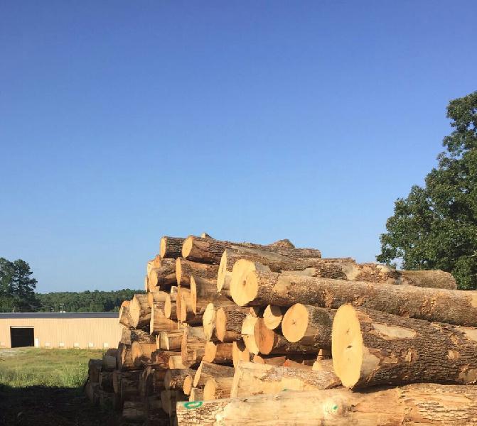 Ash Wood Logs 01