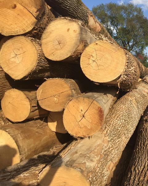 Ash Wood Logs 03