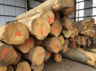 Ash Wood Logs 04