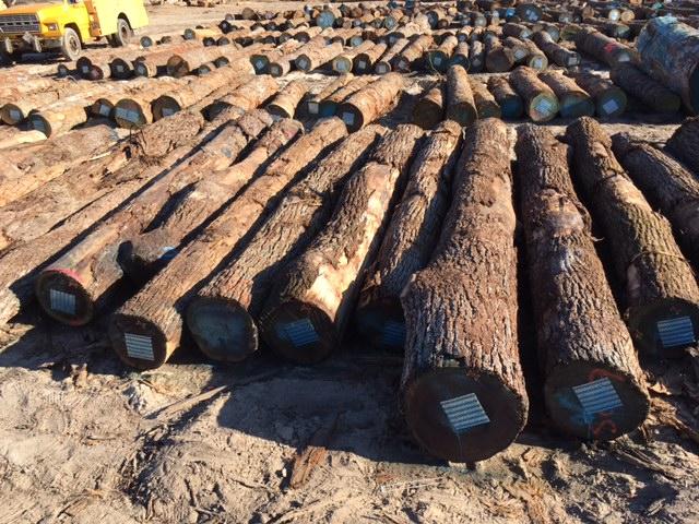 Walnut Wood Log 02