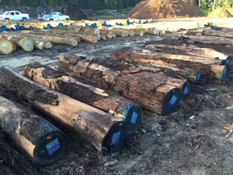 Walnut Wood Log 03
