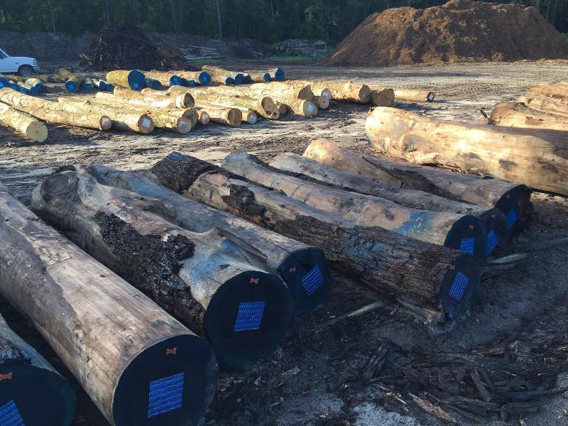 Walnut Wood Log 04