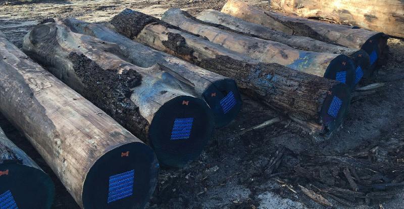 Walnut Wood Log 05