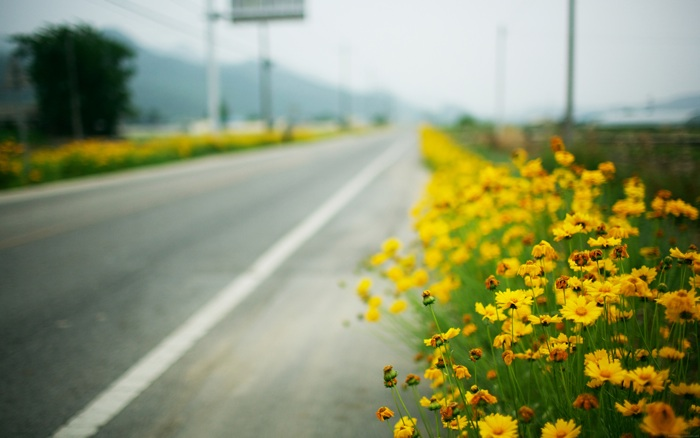 Roadside Plants