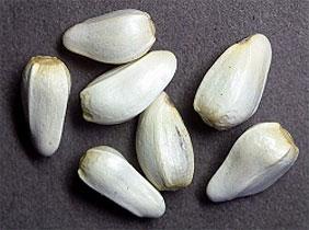 Safflower Seeds