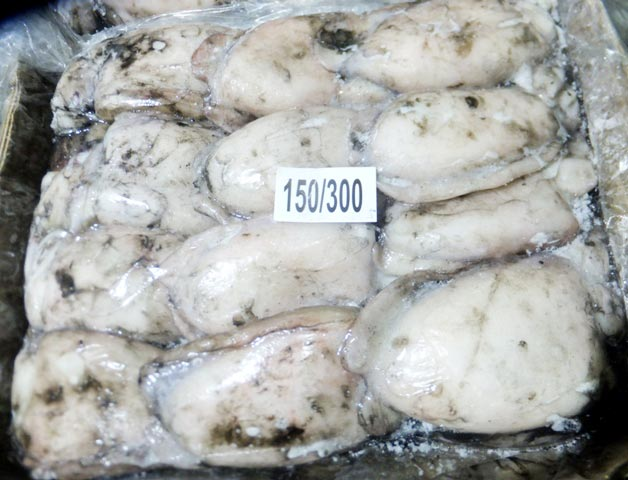 Frozen Cuttlefish Whole Uncleaned