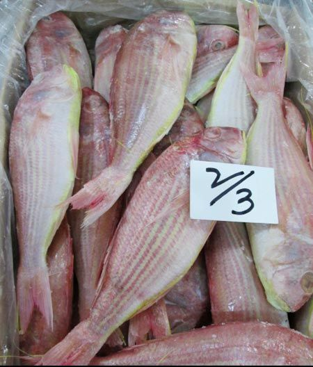 Frozen Japanese Threadfin Bream Fish