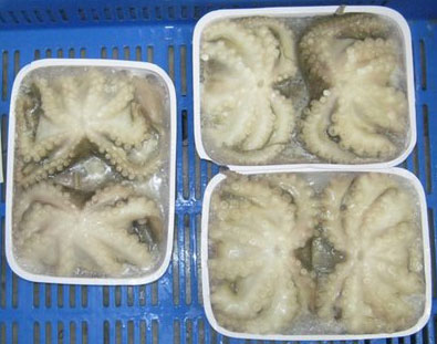 Frozen Octopus Whole Cleaned