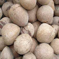 Coconut Copra 06
