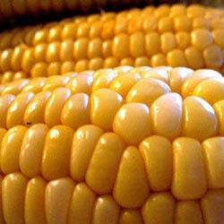 Fresh Yellow Maize