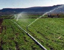 Orchard Irrigation System