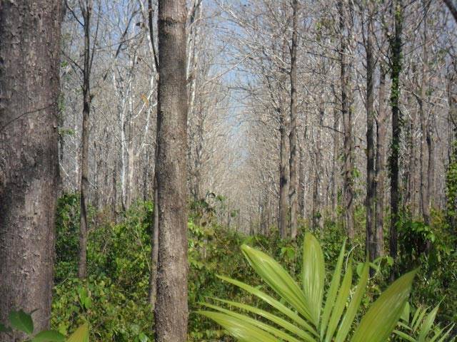 Forests for Sale in Brazil (Plantations)