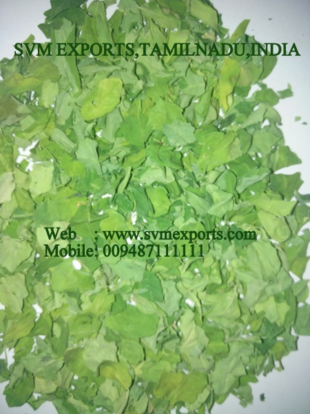 New Moringa Leaves