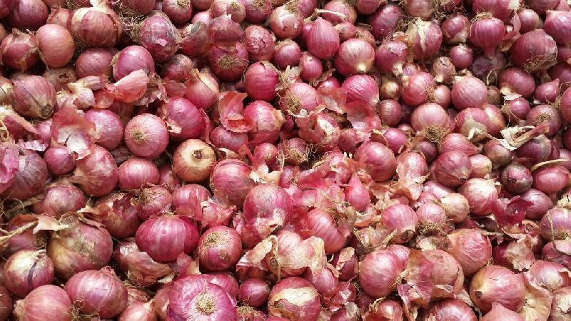 Fresh Small  Onion Suppliers/Manufacture/Exporters In India