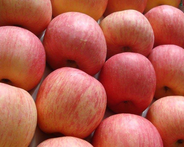 Grade A fresh fuji apples for sale