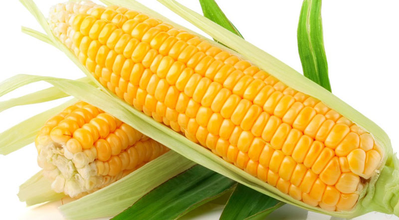 White and Yellow Corn/Maize GRADE 1