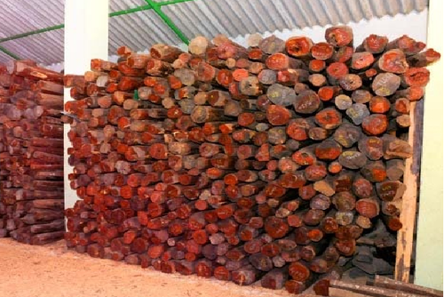 Red Sandal Wood Logs