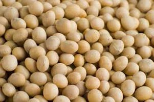 Soybean Seeds 01