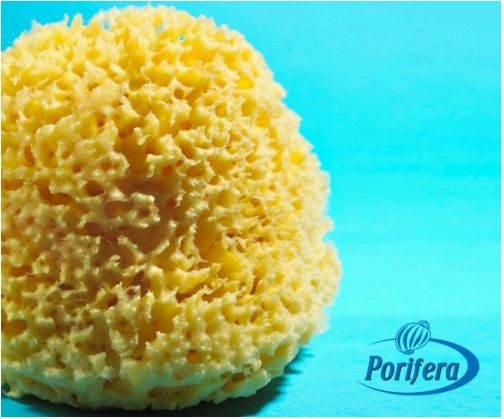Wool Bath Sponges