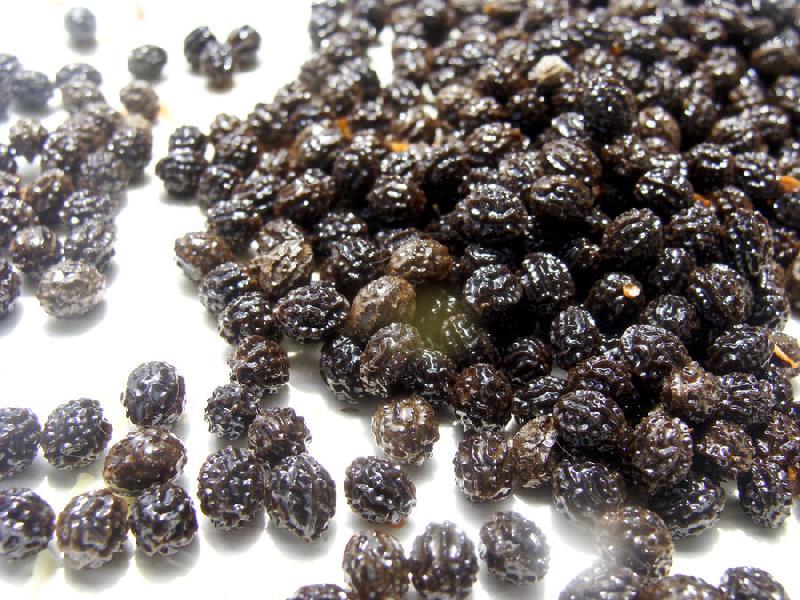 Dried Papaya Seeds