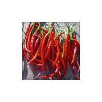 Teja S17 Dried Red Chilli