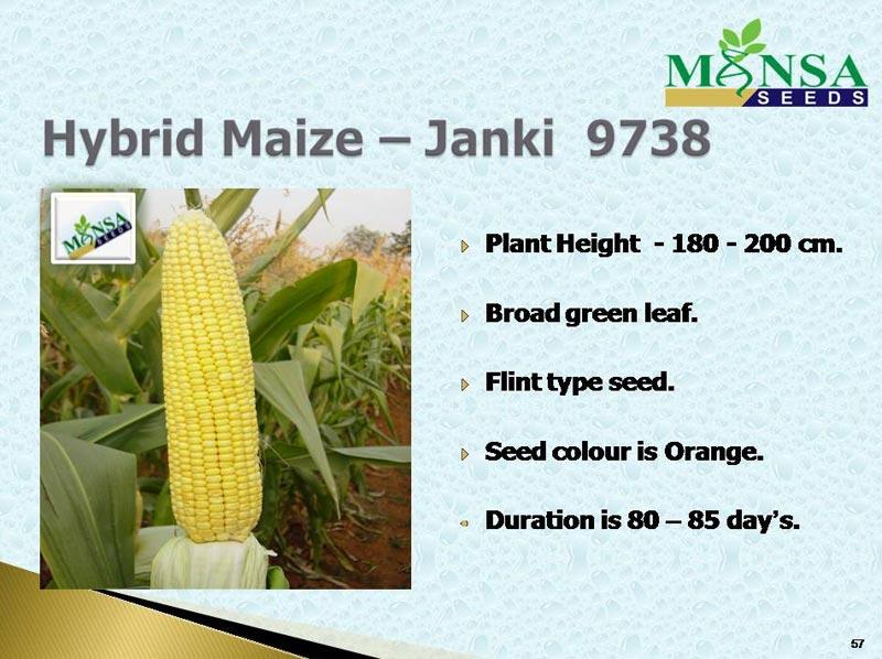 Maize Seeds (Janki-9738) 01