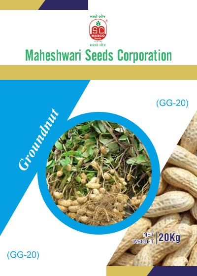 GG-20 Groundnut Seeds