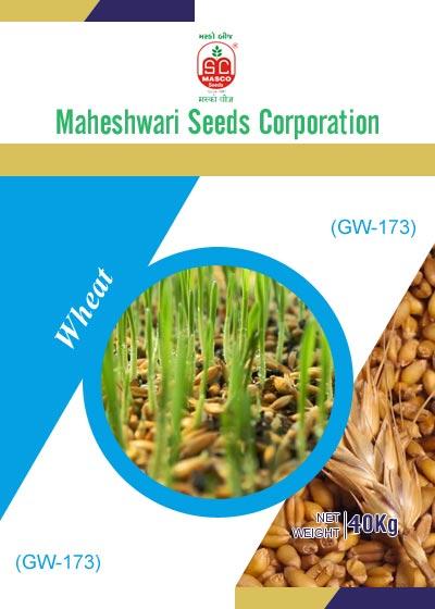 GW-173 Wheat Seeds