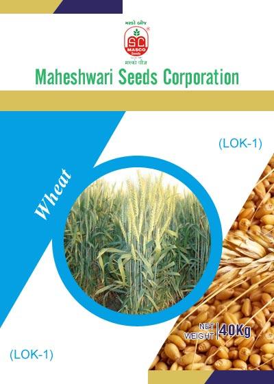 LOK-1 Wheat Seeds