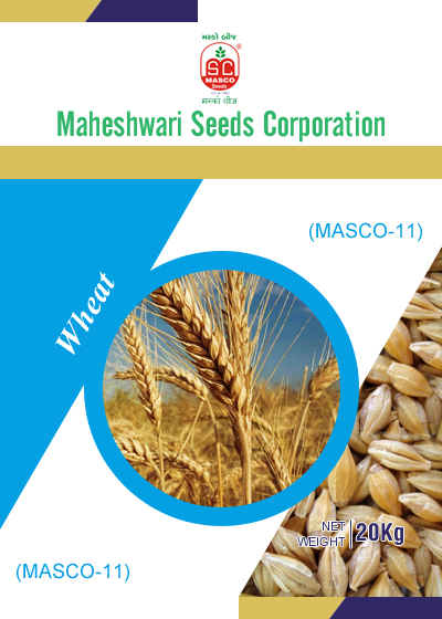Masco-11 Wheat Seeds