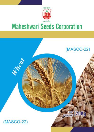 Masco-22 Wheat Seeds